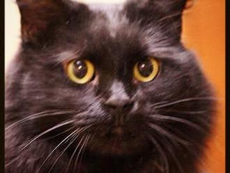 Meet Molly! FAV's Cat of the Week