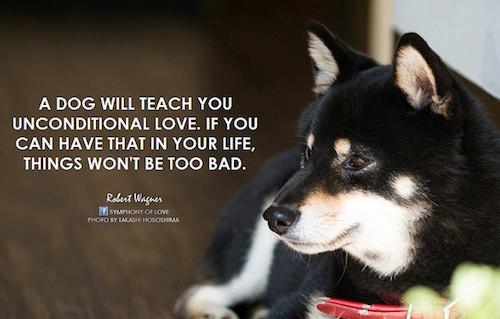 Animal Quote_Robert Wagner.jpg