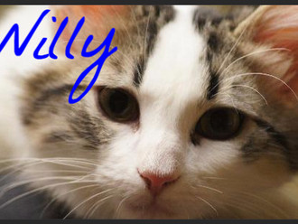 Meet Willy! FAV's Cat of the Week