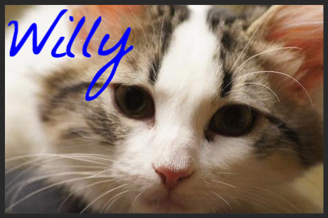 Willy (Pet ID# 36638)_Little Rock Animal Village_Friends of the Animal Village
