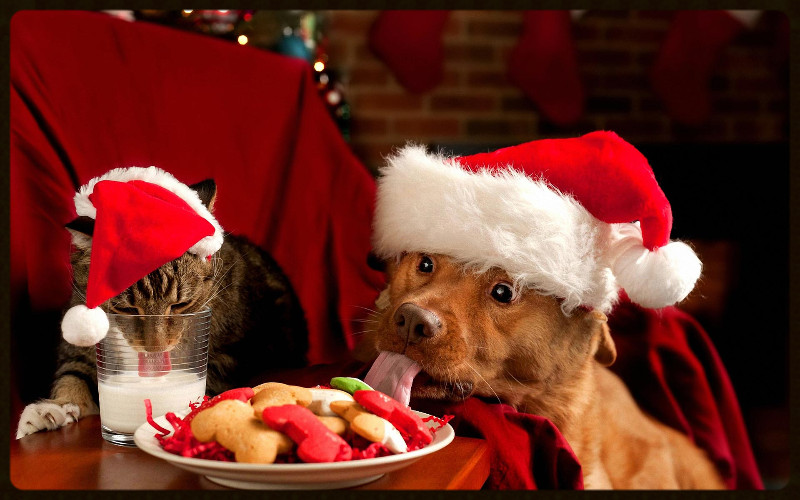 christmas cat and dog_home for the holidays_edited.jpg