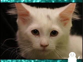 Meet Frosty! FAV's Cat of the Week
