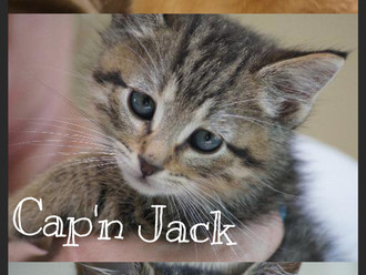 Triple Feature! FAV's Cat of the Week
