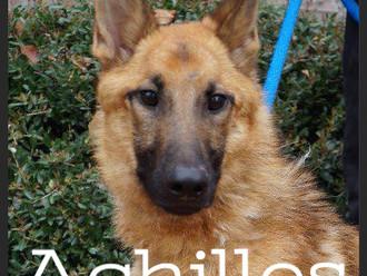 Meet Achilles! FAV's Dog of the Week