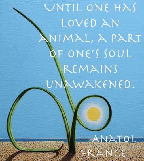Animal Quotes_Anatol France.jpg