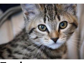 Meet Tessie! FAV's Cat of the Week