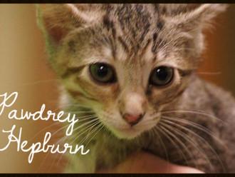 Meet Pawdrey Hepburn! FAV's Cat of the Week