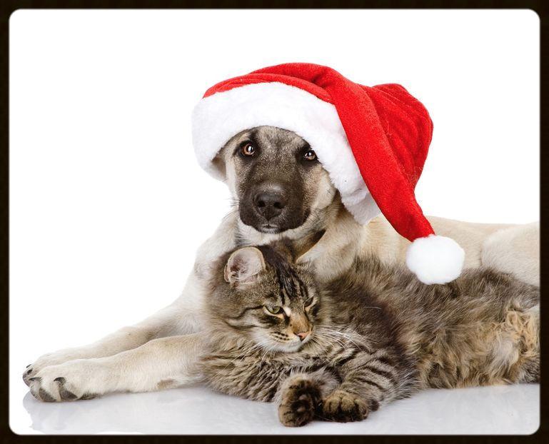christmas dog and cat_edited.jpg