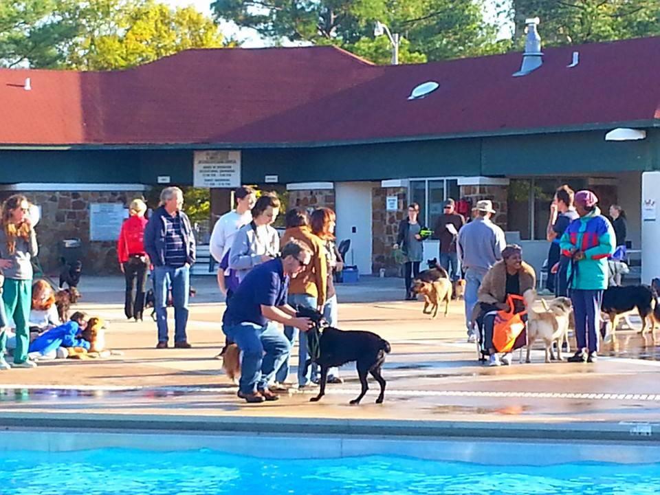 Doggie Paddle Day_Crowd Shot_2.jpg