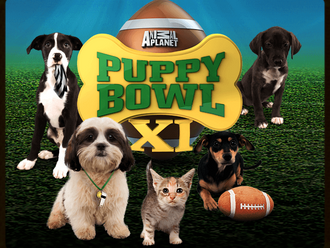 16 Stars of Puppy Bowl XI