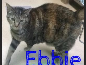 Meet Ebbie! FAV's Cat of the Week
