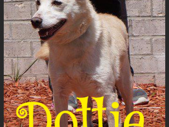 Meet Dottie! FAV's Dog of the Week
