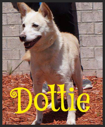 Dottie (Pet ID# 34244)_Dog of the Week_Little Rock Animal Village_Friends of the Animal Village.jpg