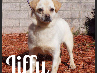 Meet Jiffy! FAV's Dog of the Week