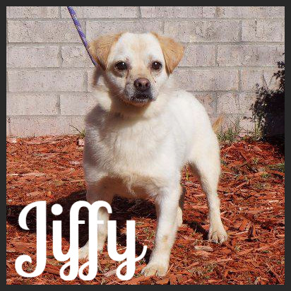 Jiffy (Pet ID# 37410)_Dog of the Week_Little Rock Animal Village_Friends of the Animal Village.jpg