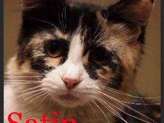 Meet Satin! FAV's Cat of the Week