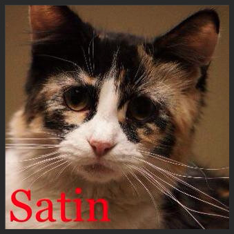 Satin (Pet ID# 33092) Little Rock Animal Village