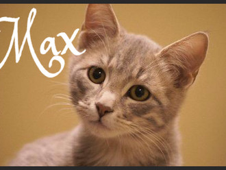 Meet Max! FAV's Cat of the Week