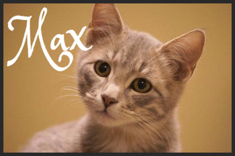 Max (Pet ID#37380)_Little Rock Animal Village_Friends of the Animal Village