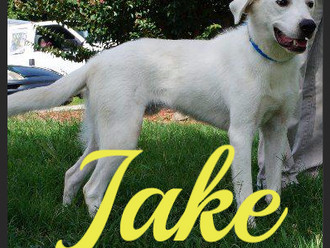 Meet Jake! FAV's Dog of the Week
