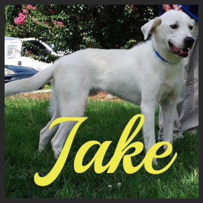 Jake (Pet ID# 35540)_Dog of the Week_Little Rock Animal Village_Friends of the Animal Village.jpg