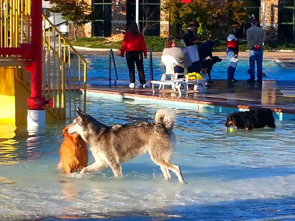 Doggie Paddle Day_Kiddie Pool.jpg