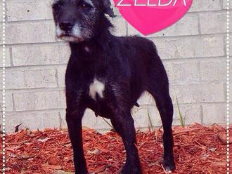 Meet Zelda! FAV's Dog of the Week