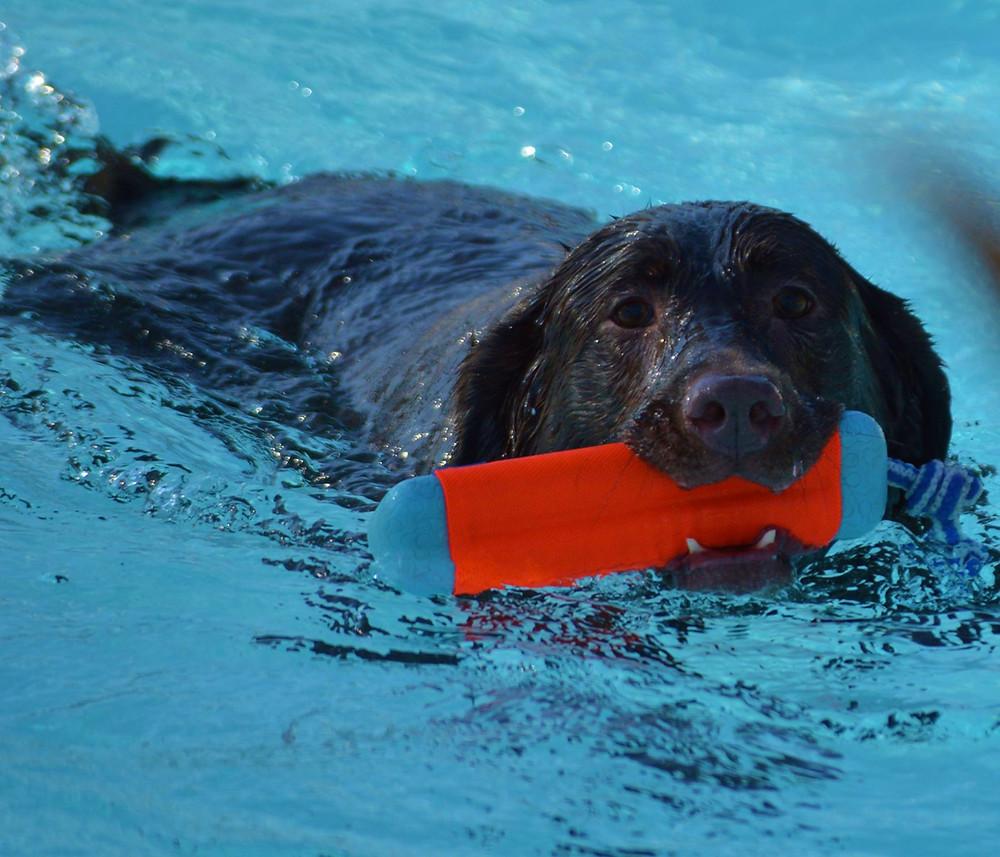 Doggie Paddle Day_Dog Swimming_Deb Ditommaso.jpg