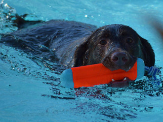 Scenes From Our 2014 Doggie Paddle Day!