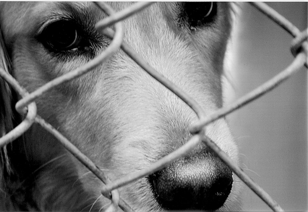 Where do shelter animals come from?