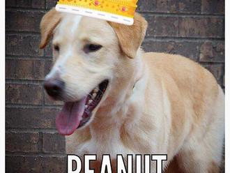 Meet Peanut! FAV's Dog of the Week