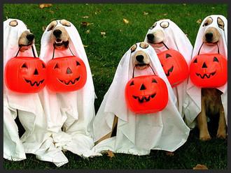 13 Pet Halloween Costumes