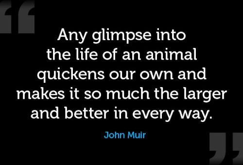 Animal Quote_John Muir.jpg
