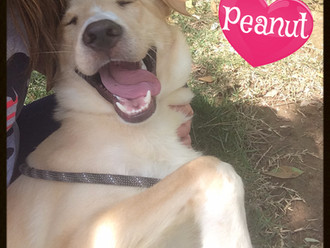 Peanut's Story
