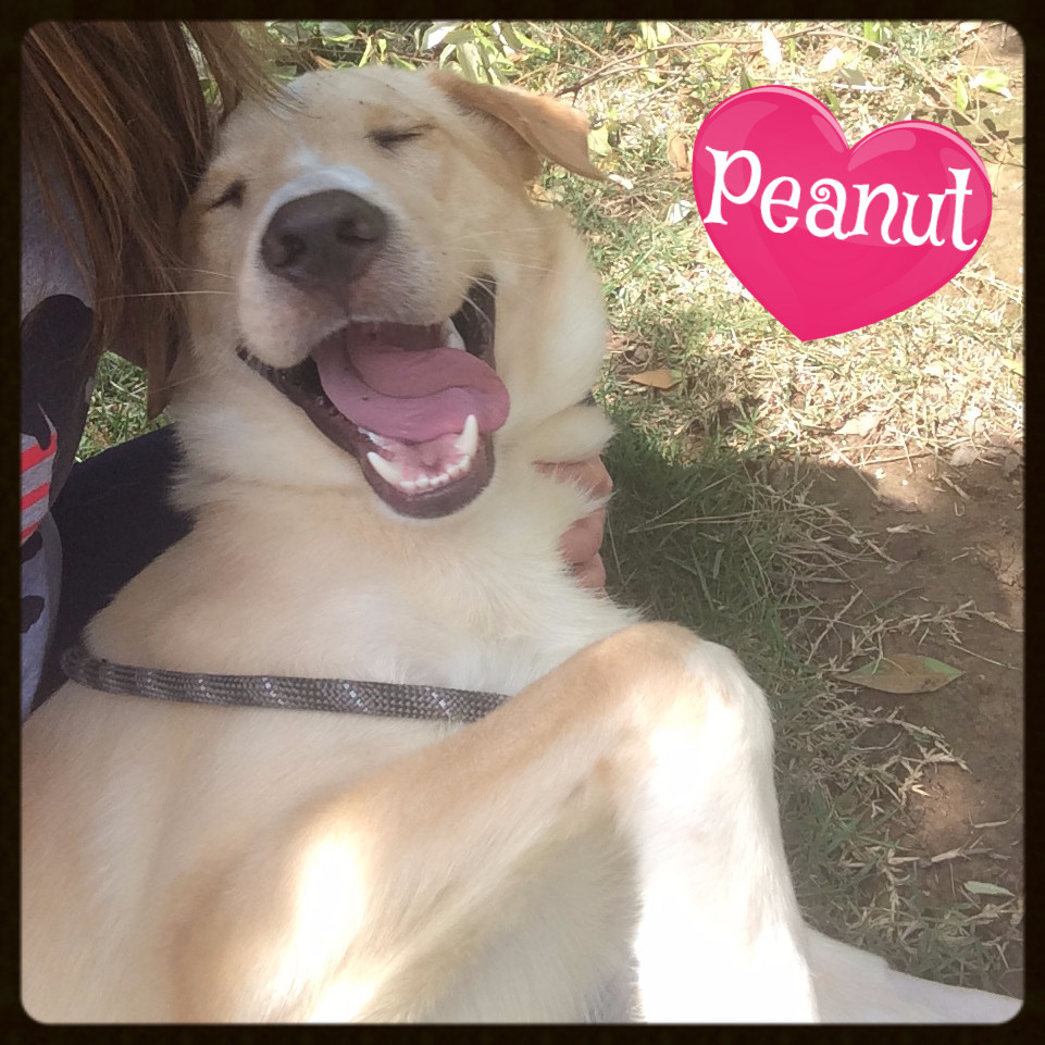peanut 3_edited.JPG