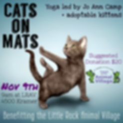 kitten yoga cats on mats 110919 graphic.