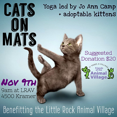kitten yoga cats on mats 110919 graphic.