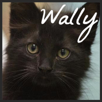 Wally (Pet ID# 34897)_Friends of the Animal Village_Little Rock Animal Village