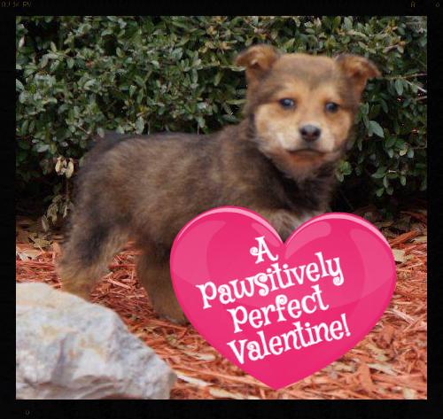 Holt_Pet ID# 33670_Little Rock Animal Village_Friends of the Animal Village_edited.jpg