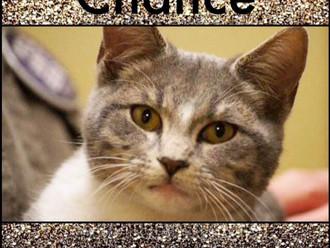 Meet Chance! FAV's Cat of the Week