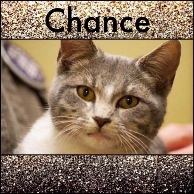 Chance_1.jpg