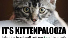 It's Kittenpalooza!!!