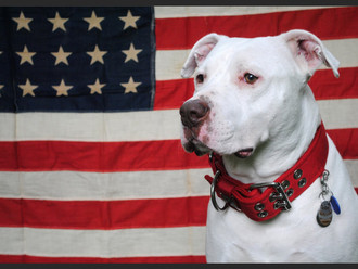 Happy National Dog Day! (And Happy Pit Bull Week!)