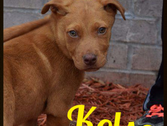 Meet Kelso! FAV's Dog of the Week