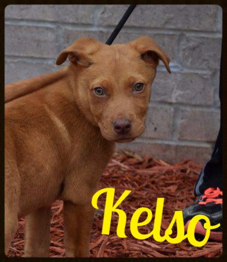 Kelso_Pet ID# 34137_Dog of the Week_Little Rock Animal Village_Friends of the Animal Village.jpg