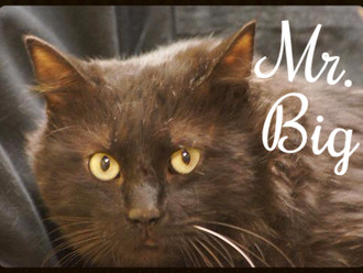 Meet Mr. Bigglesworth! FAV's Cat of the Week