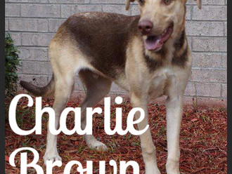 Meet Charlie Brown! FAV's Dog of the Week
