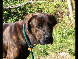 Meet Buford! FAV's Dog of the Week