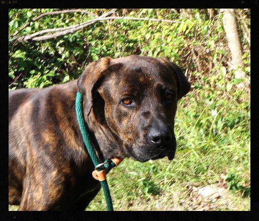Buford_Pet ID# 33534_Little Rock Animal Village_Friends of the Animal Village.jpg