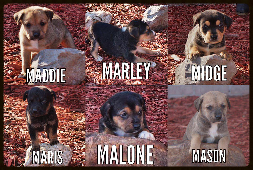 Puppies_Little Rock Animal Village_Friends of the Animal Village.jpg
